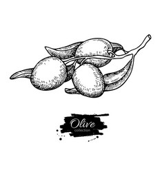 Olive branch hand drawn vector