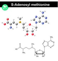 S adenosyl methionine coenzyme molecular structure vector