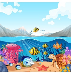Nature scene with fish and turtle vector