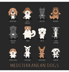 Set of middle eastern dogs  eps10 format vector