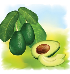 Avocados vector
