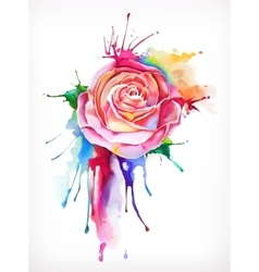 Watercolor painting rose flower vector