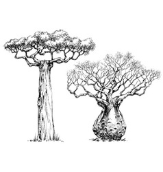 African iconic tree baobab tree vector image vector image