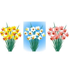 Daffodils in different colors vector