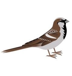 Realistic sparrow bird vector image vector image