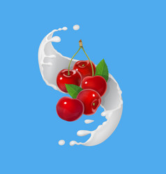 red cherry fruits and milky splash vector image vector image