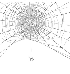 spider web isolate vector image