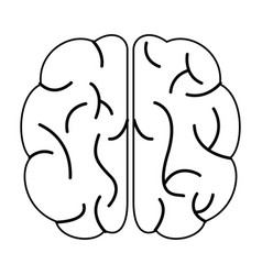 brain human organ top view outline vector image