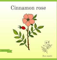 Cinnamon rose perfume plant vector