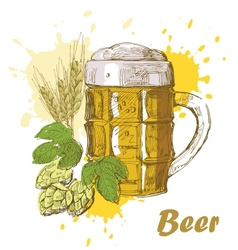 hand draw beer vector image