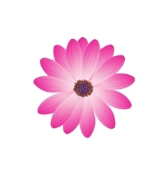 Beauty Flower Design Flat Isolated vector image vector image