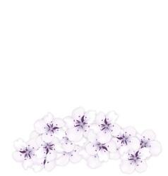 Design bottom frame blossoming bouquet sakura vector
