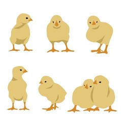 Set of chickens vector