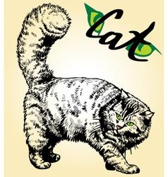cat eyes vector image vector image