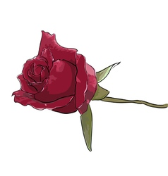 Rose - hand painting vector