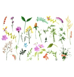 Wild flowers collection vector