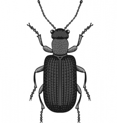big bug vector image