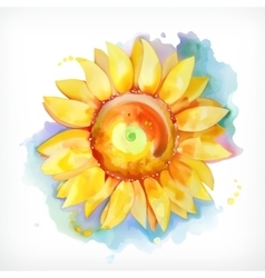 Watercolor painting sunflower vector