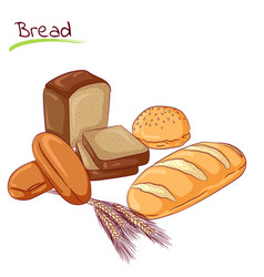 various bread loafs vector image