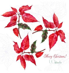 Background with red christmas poinsettia-05 vector