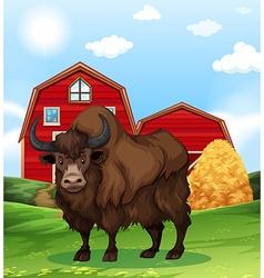 Buffalo standing in farmyard vector image vector image