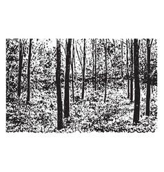 Grove of black-locust trees vintage vector