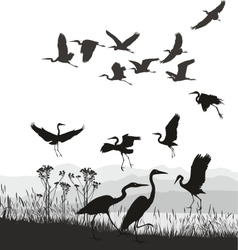 Herons on the shores of Lake vector image vector image
