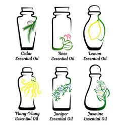 set of essential oils vector image