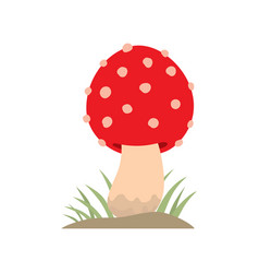 poisonous red mushroom nature food vegetarian vector image