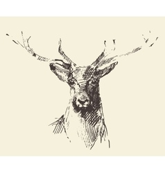 Deer engraving hand drawn sketch vector