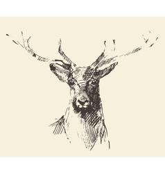 Deer engraving hand drawn sketch vector