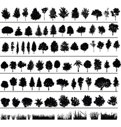 trees bushes grass vector image