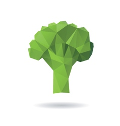 Broccoli abstract isolated on a white backgrounds vector image vector image