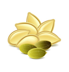 Pumpkin seeds isolated on white vector