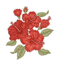 Red hibiscus flowers and leaves in vintage style vector