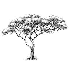 African tree marula tree vector image