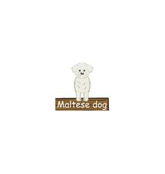 Maltese cartoon dog icon vector