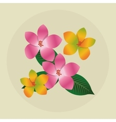Tropical design flower concept nature icon vector image