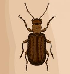 big bug vector image