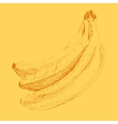 Banana menu engraved sketch vector