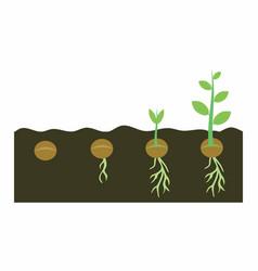 Plants growing in soil vector