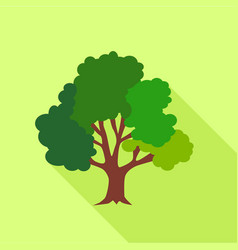 big fluffy tree icon flat style vector image
