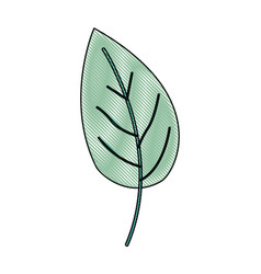 Crayon silhouette of green color of simple leaf vector