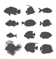 Set of sea fish color design flat vector