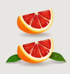 slice of grapefruit realistic vector image vector image