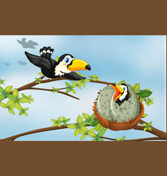 Toucan birds on the nest vector