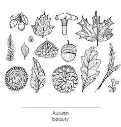 Hand drawn autumn beautiful set of leaves flowers vector image