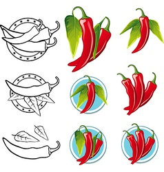 Chili pepper - vector