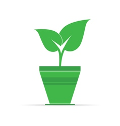 Plant in pot icon vector