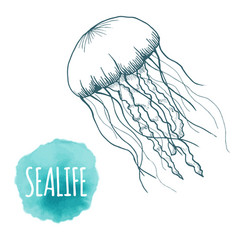 hand drawn sketch isolated jellyfish marine vector image vector image